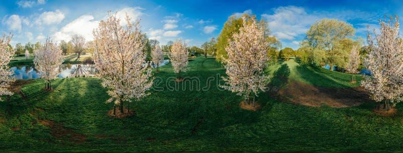 Arbre blanc dans la photo de bourdon de la ville 360 VR de Riga pour la réalité virtuelle, panorama photographie stock