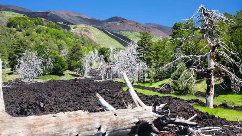 Arbre brûlé dans l'écoulement de lave durci sur la pente de l'Etna photographie stock