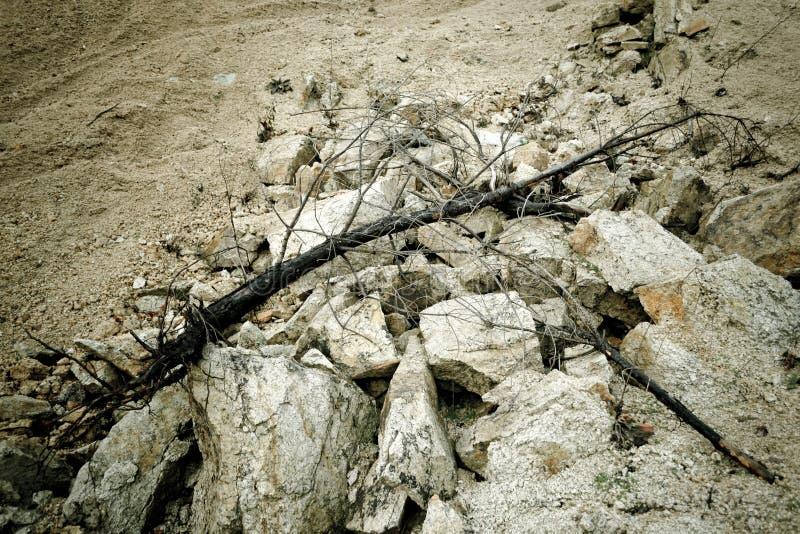 Arbre carbonisé sur des pierres photographie stock