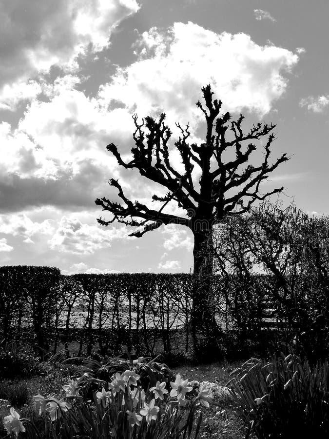 Arbre chauve comme silhouette sur le rivage de lac avec le grand nuage en noir et blanc photos stock