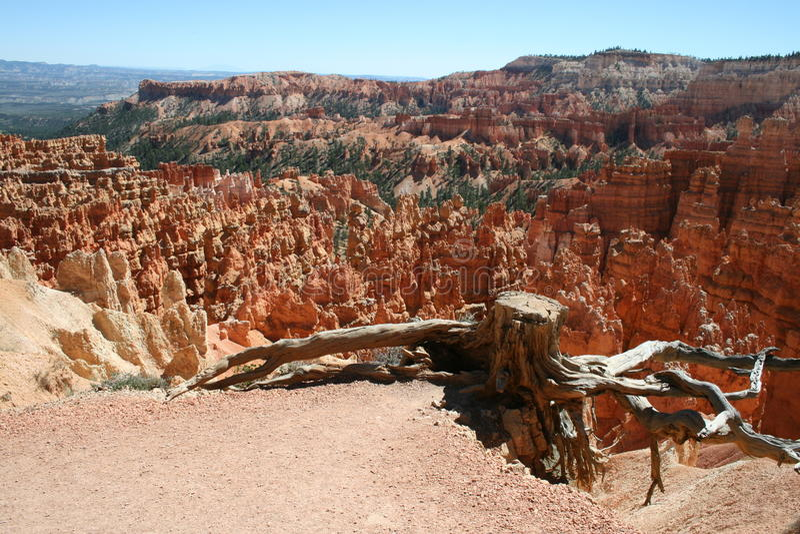Arbre chez Bryce Canyon photos libres de droits