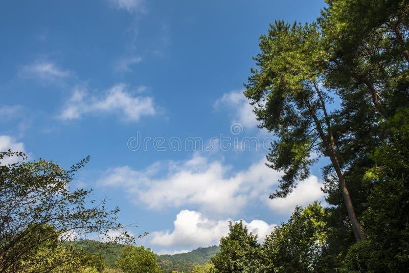Arbre, ciel, feuille verte et nuage photographie stock libre de droits