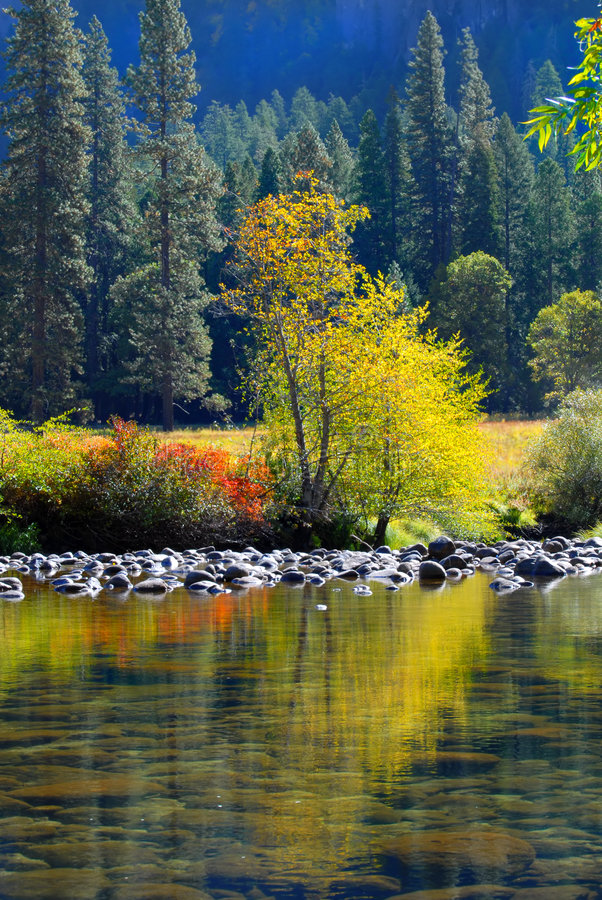 Arbre coloré et feuillage se reflétant dans le fleuve de Merced dans Yo photographie stock