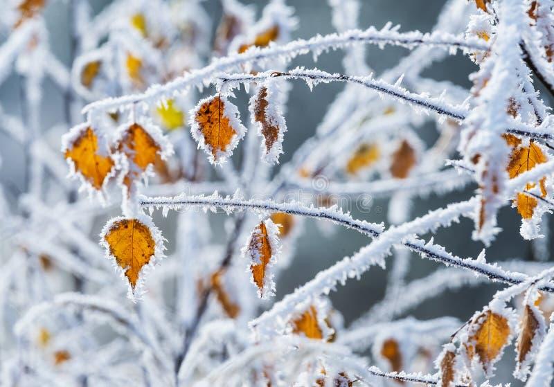 Arbre congelé avec les feuilles jaunes image stock