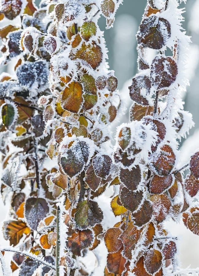 Arbre congelé avec les feuilles jaunes photo libre de droits