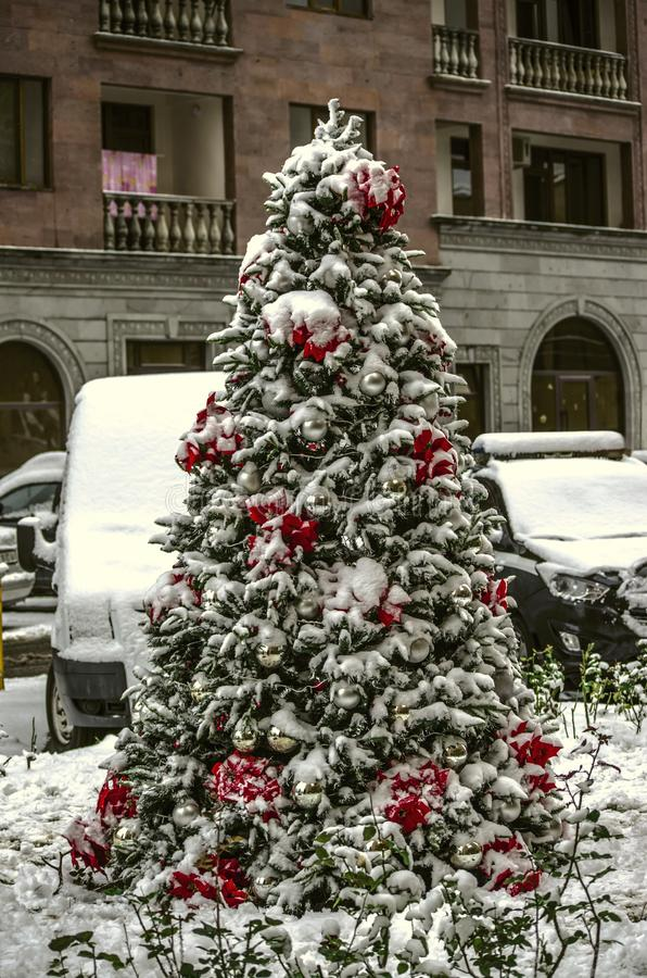 Arbre conifére s'élevant sur la rue, décorée des décorations de Noël, des boules blanches, de la poinsettia rouge et des guirland photo stock