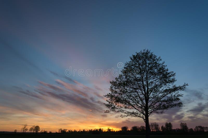 Arbre contre le ciel et les nuages color?s apr?s coucher du soleil photos libres de droits