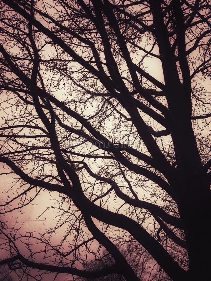 Arbre contre le ciel rose photo stock