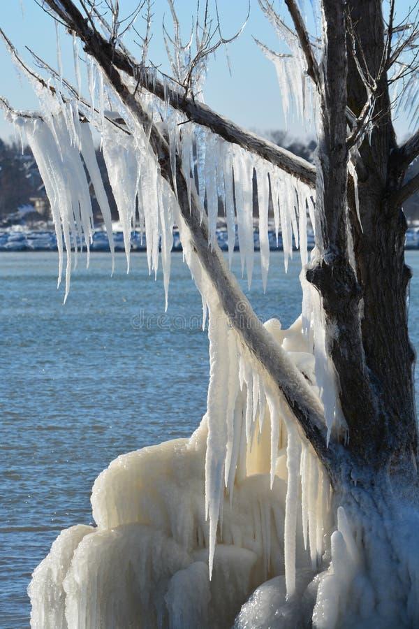 Arbre couvert par glace le long de plage le long du lac Ontario image libre de droits