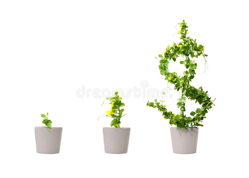 Arbre croissant du dollar photos stock