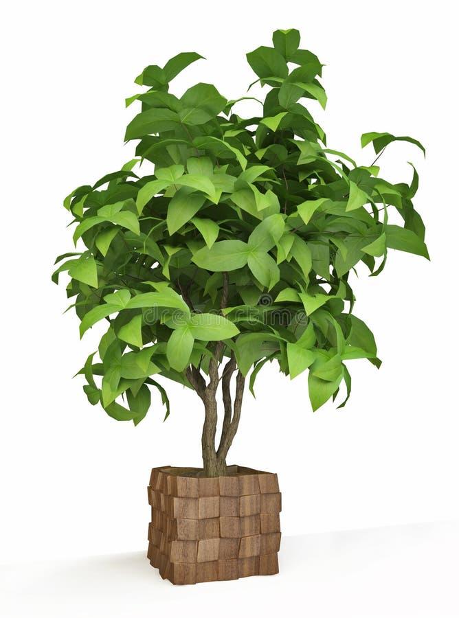 arbre d coratif de plante d 39 int rieur illustration stock. Black Bedroom Furniture Sets. Home Design Ideas