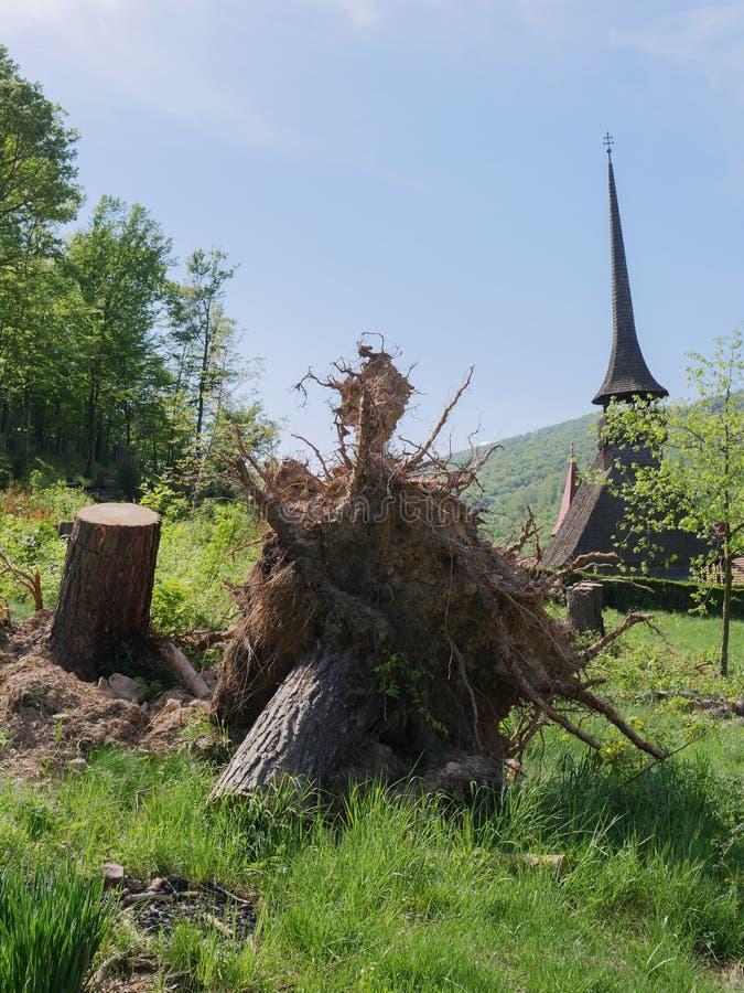 Arbre déraciné avec une église en bois à l'arrière-plan images stock