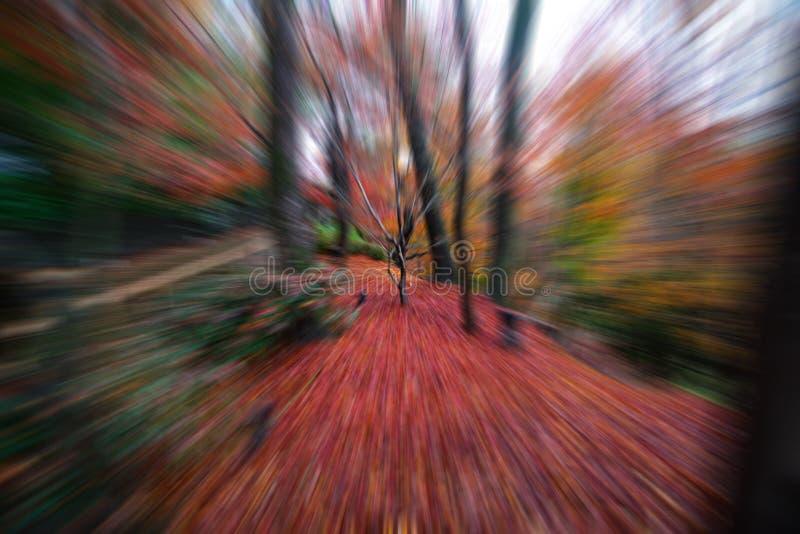 Arbre d'érable en automne Japon avec l'effet de bourdonnement image stock