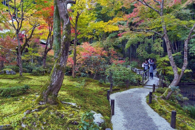 arbre d 39 rable rouge japonais pendant l 39 automne dans le jardin au temple d 39 enkoji kyoto japon. Black Bedroom Furniture Sets. Home Design Ideas