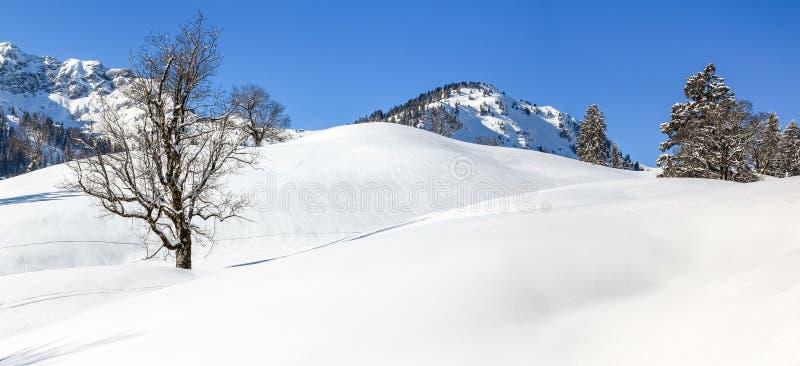 Arbre d'érable solitaire dans la neige profonde Paysage d'hiver de montagnes le jour ensoleillé clair photos libres de droits