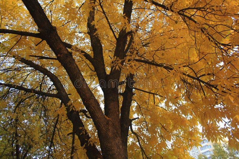 Arbre d'automne photos stock