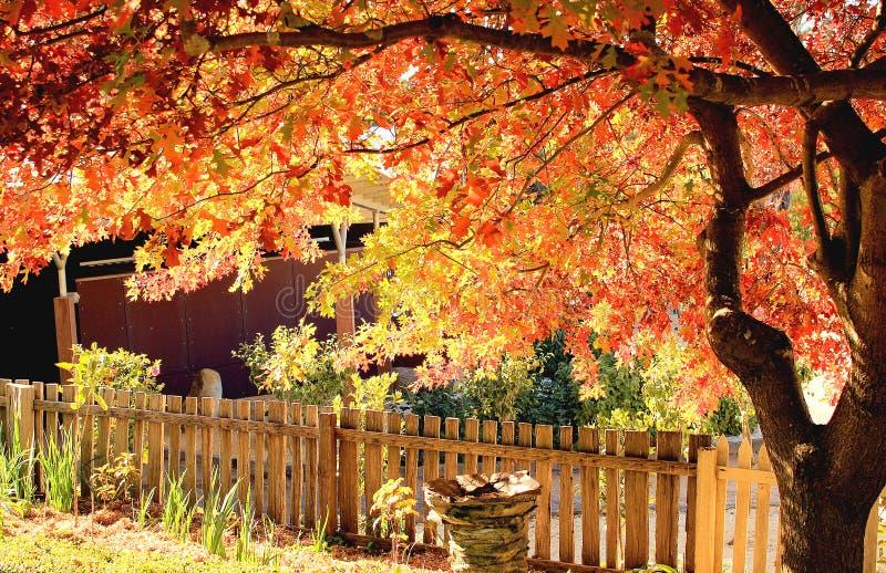 Arbre d'automne image libre de droits