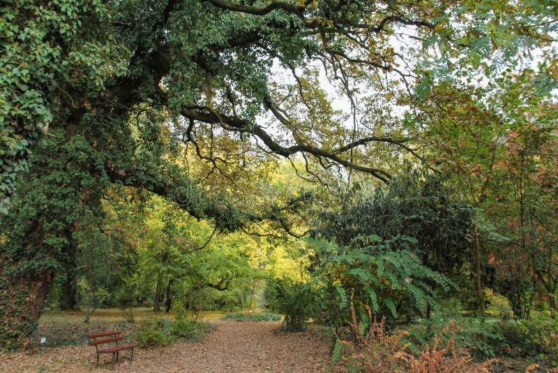 Arbre d'automne avec les feuilles colorées au jardin botanique photographie stock