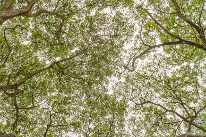 Arbre d'automne dans la forêt vue de la terre  photographie stock libre de droits