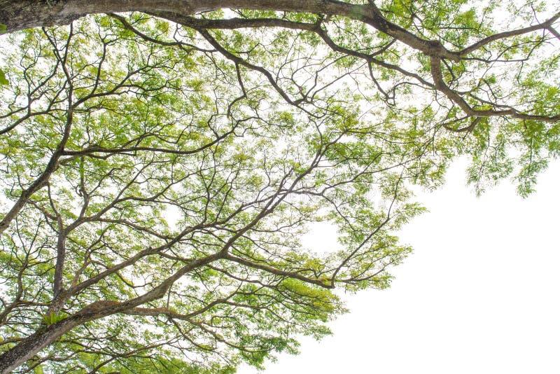Arbre d'automne dans la forêt vue de la terre  images stock