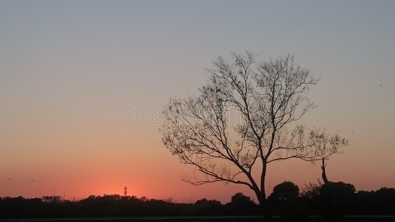 Arbre d'automne pendant le coucher du soleil image libre de droits