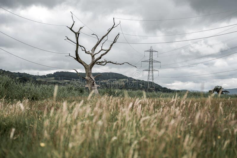 Arbre d'Electricic photo libre de droits