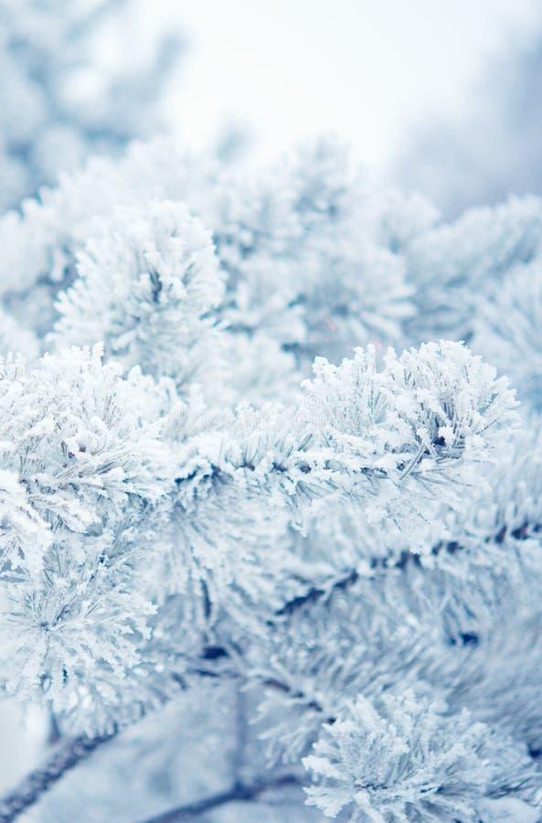 Arbre d'hiver avec neige image stock