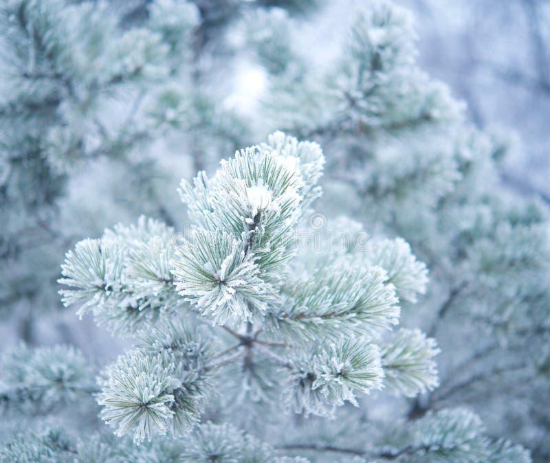 Arbre d'hiver avec neige photos libres de droits