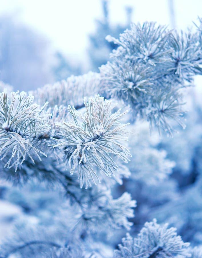 Arbre d'hiver avec neige images libres de droits