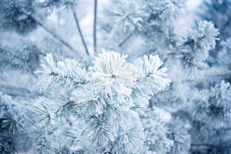 Arbre d'hiver avec neige photographie stock
