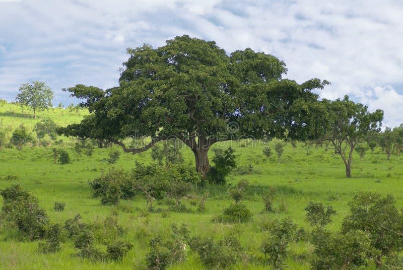 arbre d'horizontal photographie stock