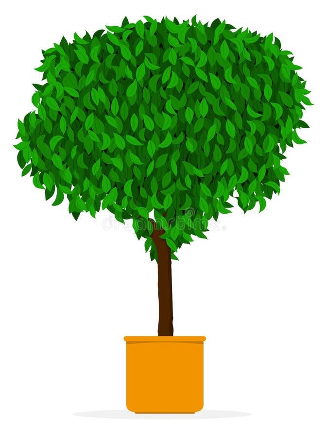 Arbre D\'intérieur/extérieur - Ficus Dans Le Bac Illustration de ...