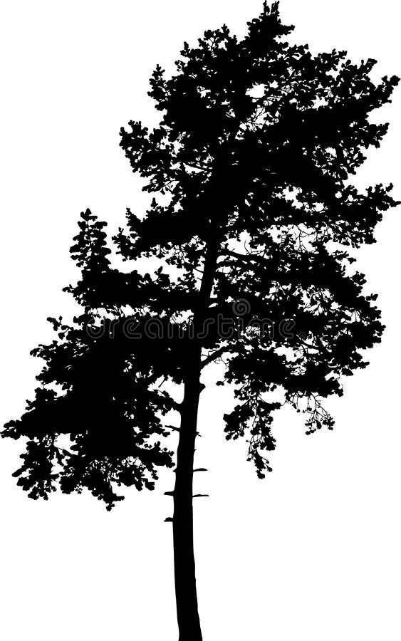 Arbre d'isolement - silhouette 7. images stock