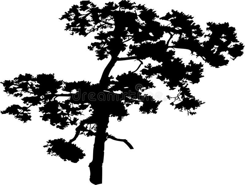 Arbre d'isolement - 40. Silhouette images stock