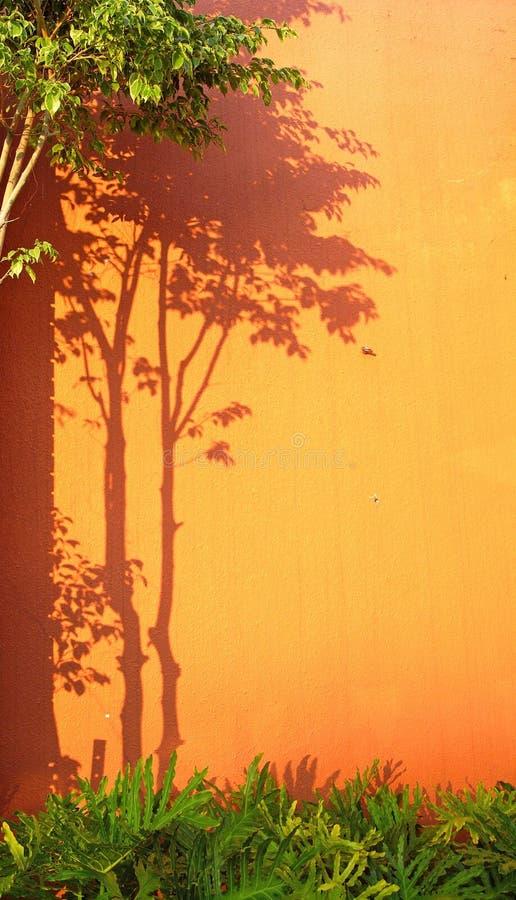arbre d'ombre photographie stock