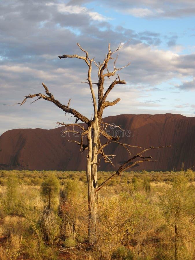 Arbre d'Uluru images libres de droits