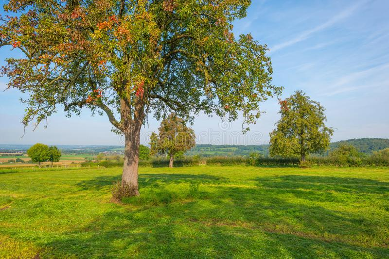 Arbre dans des couleurs d'automne dans un pré au soleil à la chute image stock