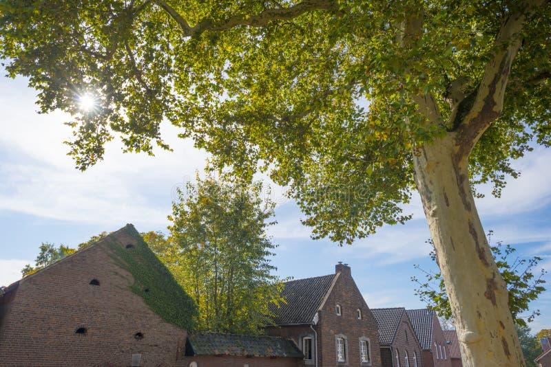 Arbre dans des couleurs d'automne dans un village au soleil photos libres de droits