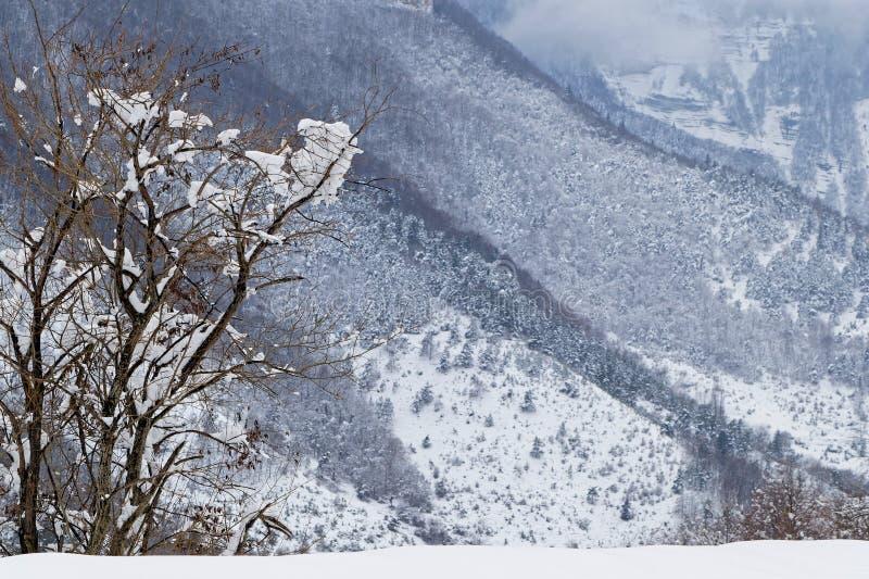 Arbre dans des gorges de Goulets de Grands, Alpes français photo libre de droits