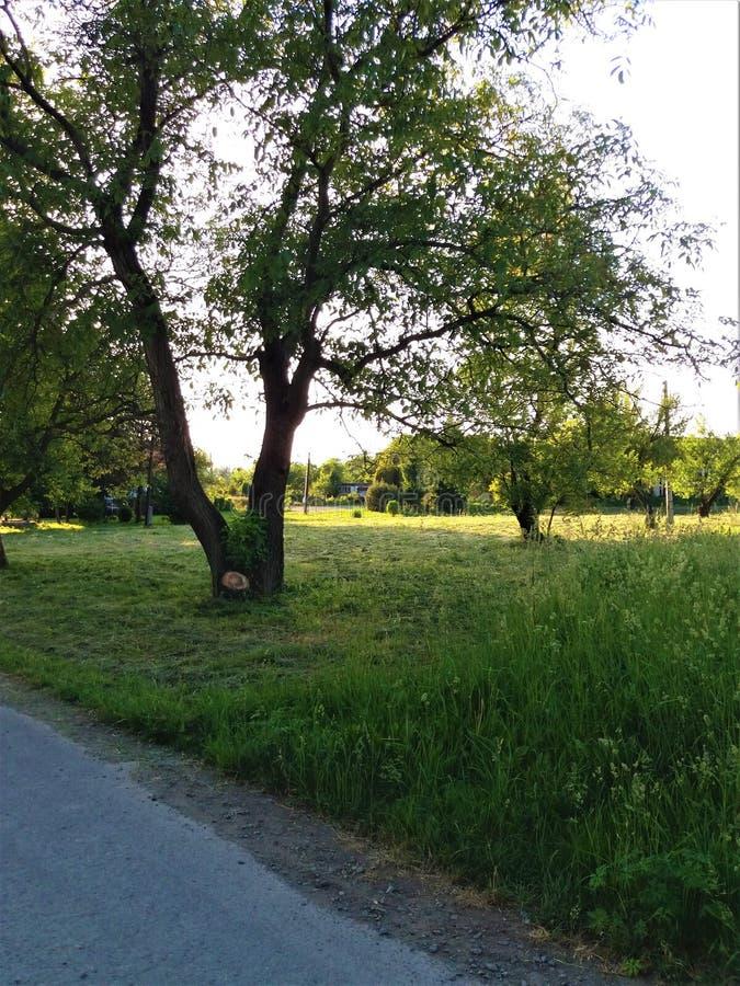 Arbre dans l'herbe courte photographie stock