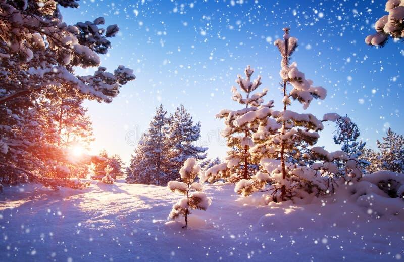Arbre dans l'horizontal de l'hiver photo stock