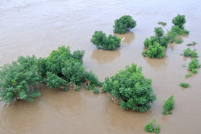 Arbre dans l'inondation photo stock