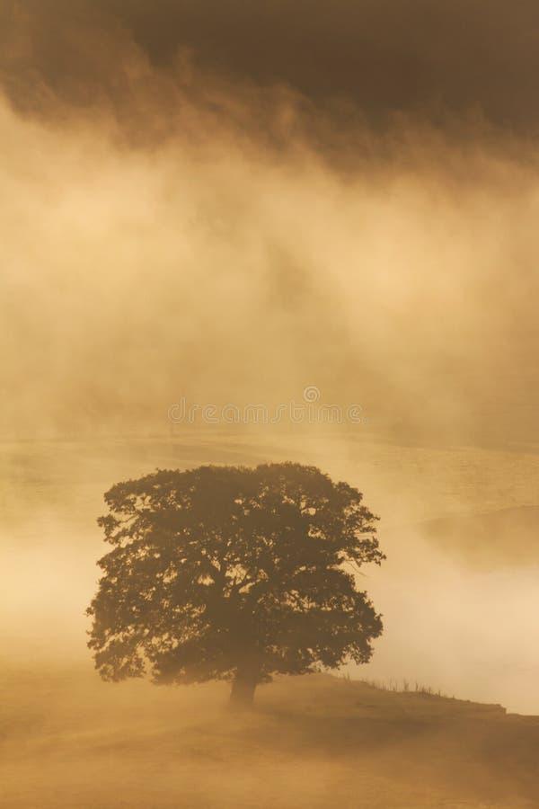 Arbre dans la brume de matin photographie stock libre de droits