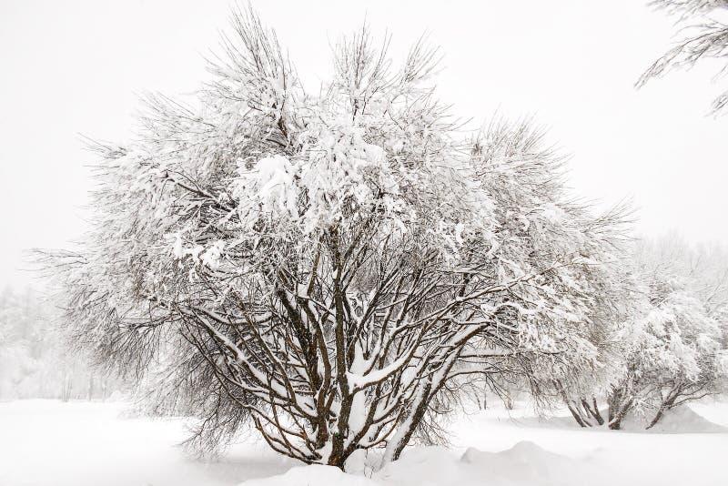 Arbre dans la neige photo libre de droits
