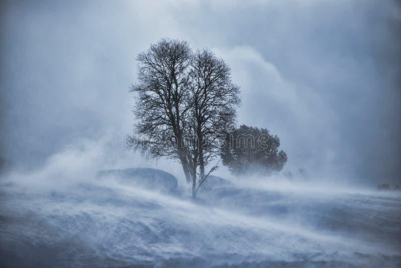 Arbre dans la tempête de neige de neige images libres de droits