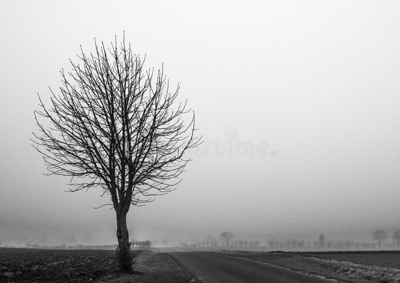 Arbre dans le brouillard photo libre de droits