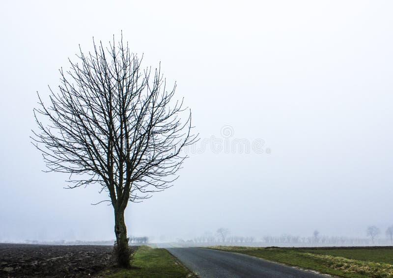 Arbre dans le brouillard photo stock