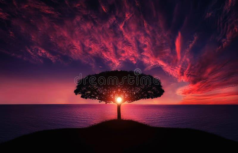 Arbre dans le coucher du soleil photo stock