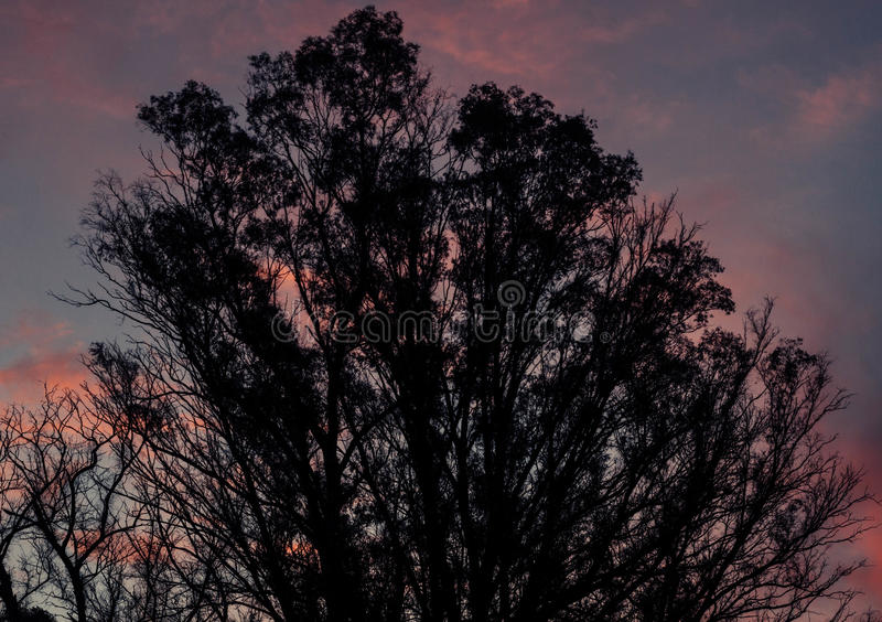 Arbre dans le coucher du soleil image libre de droits