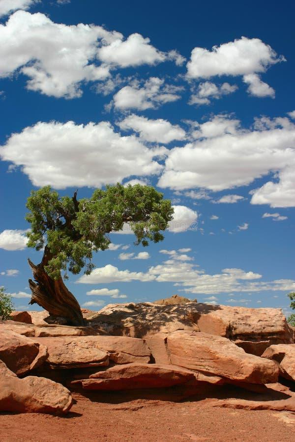 Arbre dans le désert photo libre de droits